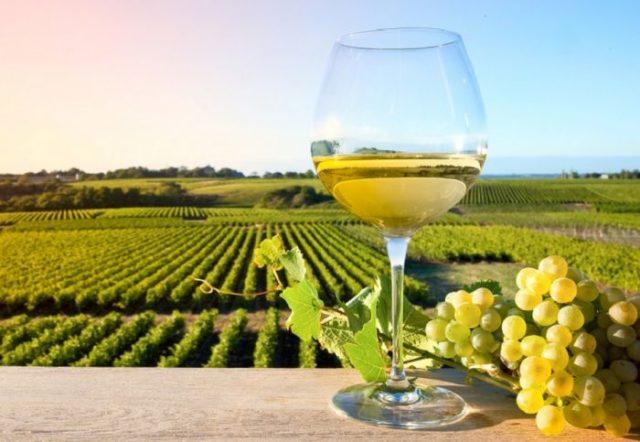 Cantine Aperte 2021, Movimento Turismo del Vino Marche non aderisce ma lancia Vigneti Aperti