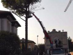 L'albero abbattuto in via Mamiani a Senigallia