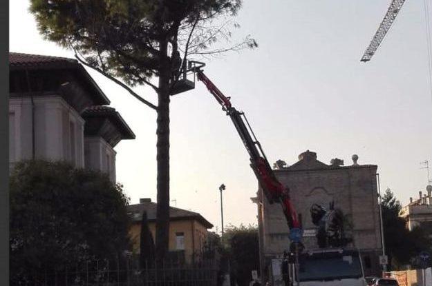 """Giù un alberoall'ex """"Villa Bucci"""", esplode la polemica social"""