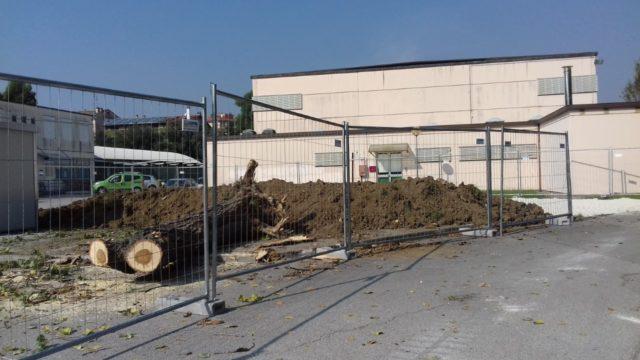Jesi, torre Erap: «Due nuovi alberi per ciascuno abbattuto»