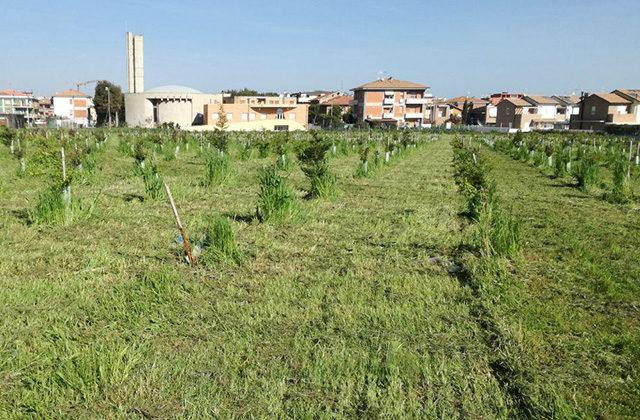 Verde urbano: il parco alla Cesanella di Senigallia