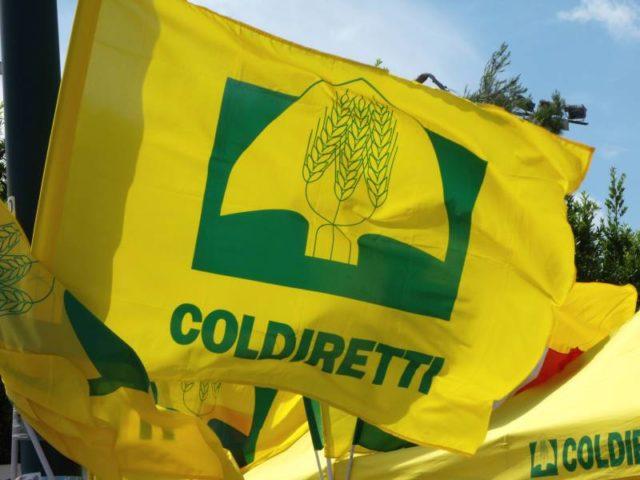 Giornata Internazionale della Gioventù, Coldiretti Marche: «1300 aziende agricole sono under 35»