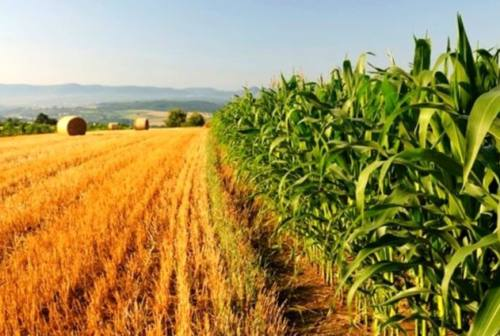 Agricoltura, l'assessore Carloni a Tipicità: «Costruiamo un mondo di qualità, moderno e competitivo»