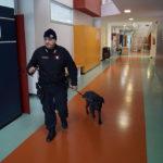I controlli antidroga da parte dei Carabinieri nelle scuole superiori di Senigallia