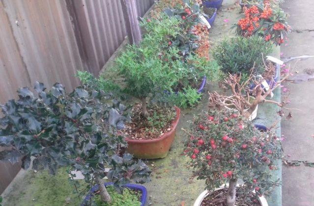 bonsai garden europa jesi