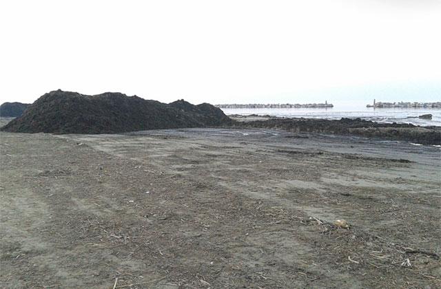 Enormi quantità di rifiuti spiaggiati a Senigallia