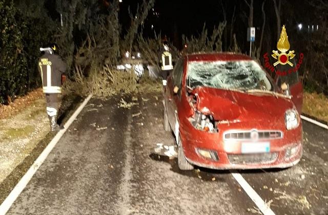 La macchina colpita dall'albero
