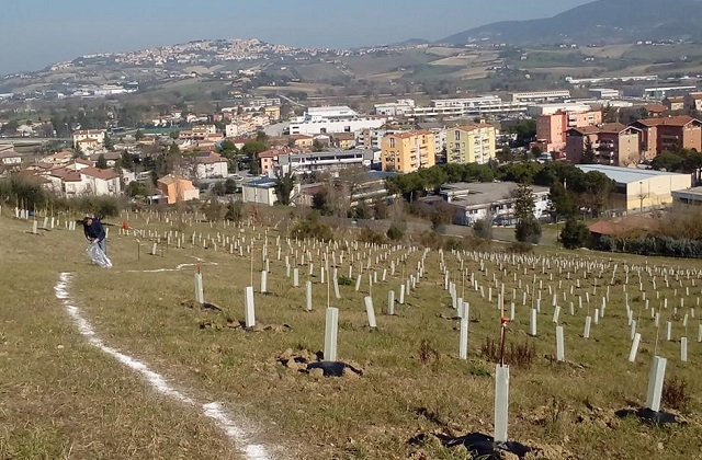 Osimo, un milione di euro in tre anni per il verde