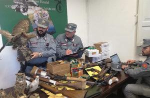 Bracconaggio nel parco Gola della Rossa e Frasassi, i Carabinieri Forestali hanno sequestrato armi, munizioni e specie protette impagliate