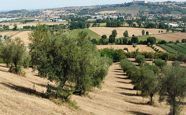 Selva di Castelfidardo (foto tratta dal sito della Fondazione Ferretti)