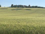 Il campo di Padiglione