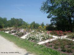 Giardino delle rose all'interno del parco della Cittadella
