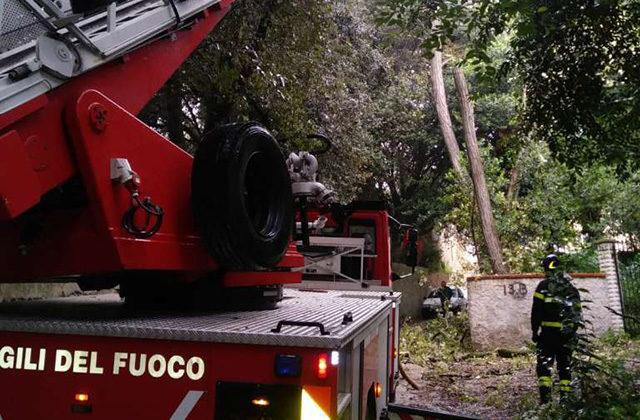L'intervento dei vigili del fuoco a Senigallia per alberi pericolanti in strada delle Grazie