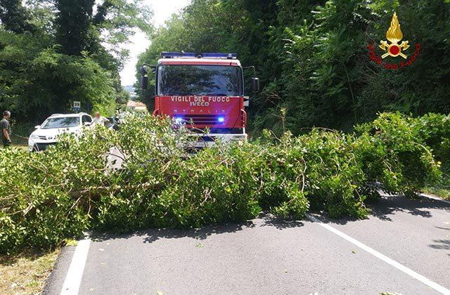 I vigili del fuoco al lavoro per rimuovere l'albero caduto per il maltempo sulla strada provinciale 18 a Trecastelli