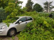alberi crollati a Osimo Stazione