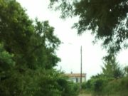 Albero caduto in via del Conero