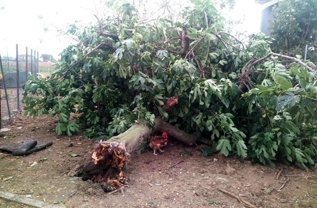 albero crollato per il maltempo