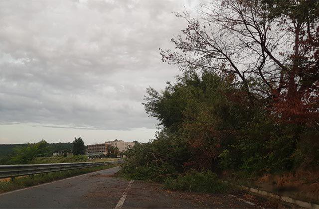 Albero caduto sulla SS16 a Castelfidardo
