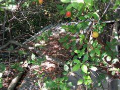 Lastre di amianto trovate a Senigallia in una discarica non autorizzata