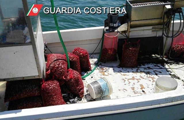La Guardia Costiera ha sequestrato 300 kg di cozze pescate senza autorizzazione