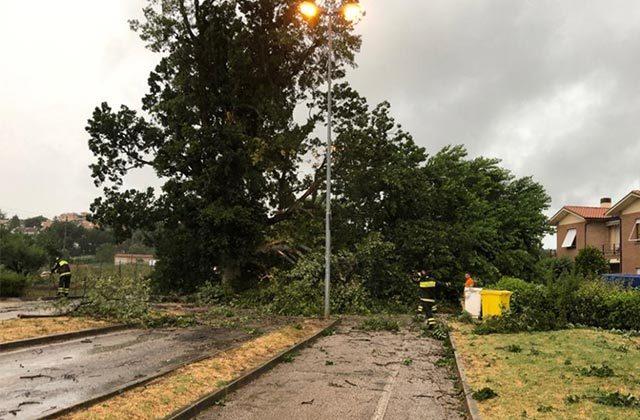 L'albero crollato per il maltempo in via Campolungo, a Jesi