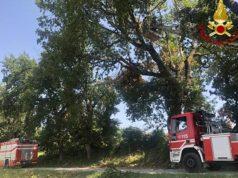 L'intervento dei Vigili del fuoco a Jesi per rimuovere dei rami pericolanti