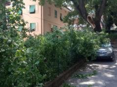l'albero spezzatosi per il maltempo dei giorni scorsi