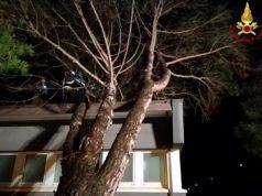 Un albero caduto sopra la scuola di Borgo Bicchia per il forte vento: l'intervento dei Vigili del fuoco