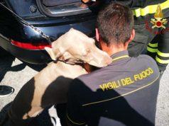 Il cane salvato dai Vigili del fuoco a Osimo