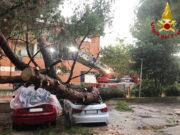 Il grosso pino crollato su due auto parcheggiate a Marzocca di Senigallia
