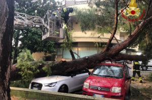 I vigili del fuoco al lavoro a Marzocca di Senigallia per liberare due auto sono un grosso pino