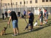 Il progetto di educazione cinofila nel carcere di Montacuto ad Ancona