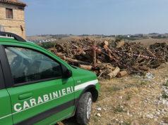 Il legname posto sotto sequestro dai Carabinieri Forestali a Serra de' Conti