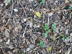 Le siringhe rinvenute al parco della Cesanella a Senigallia