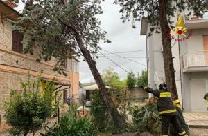 L'intervento dei Vigili del Fuoco a Senigallia, in via Sanzio, dove un albero è crollato su una casa per il maltempo