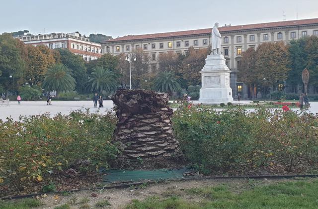 Le palme di piazza Cavour ad Ancona