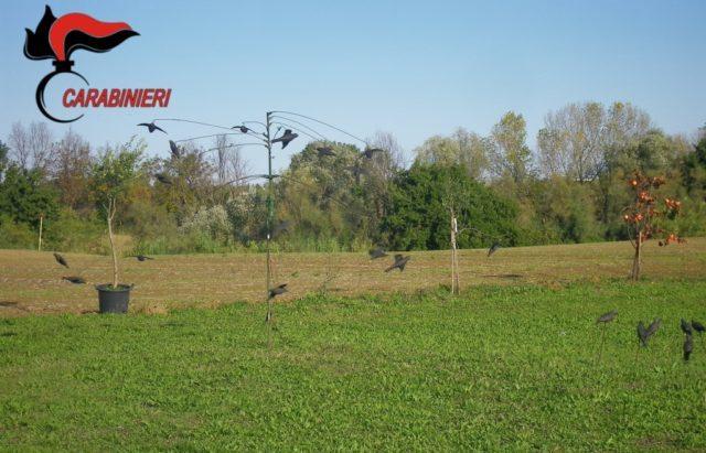 La giostra con richiamo per uccellini vietato è stata sequestrata dai Carabinieri forestali