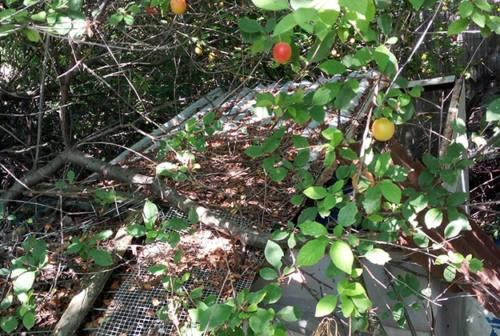 Amianto, una discarica nascosta tra la vegetazione a Senigallia