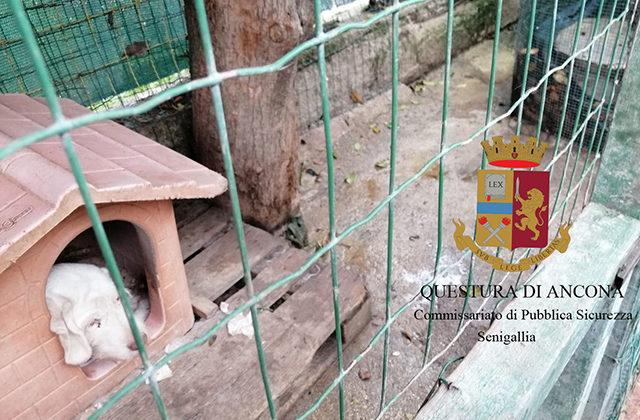 Maltrattamento dei cani a Senigallia: gabbie troppe strette e piene di escrementi