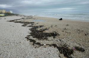 I detriti portati dalla mareggiata che ha interessato la spiaggia a Marzocca di Senigallia