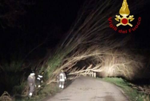 Alberi abbattuti sulle auto, pioggia all'interno dell'ospedale: è emergenza maltempo a Fabriano