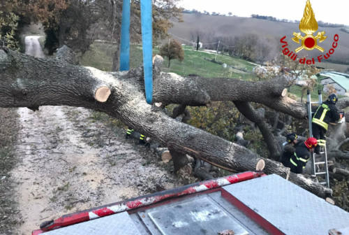 Grossa quercia cade a terra e blocca alcuni residenti