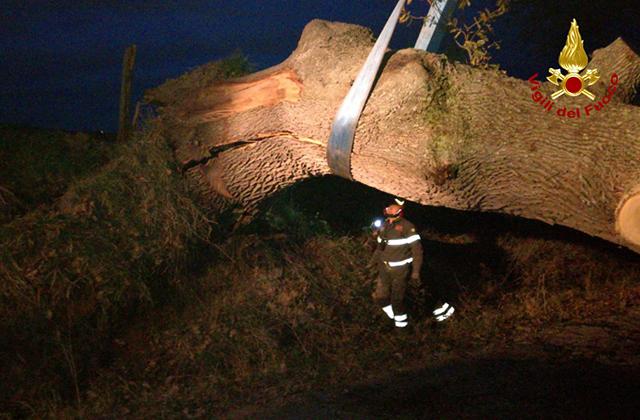 I Vigili del fuoco sono intervenuti per liberare un passaggio da un grosso albero caduto a Senigallia