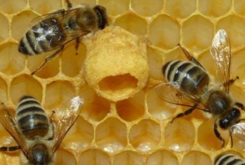 Bee Safe: a Jesi, la Riserva di Ripa Bianca per la difesa delle api