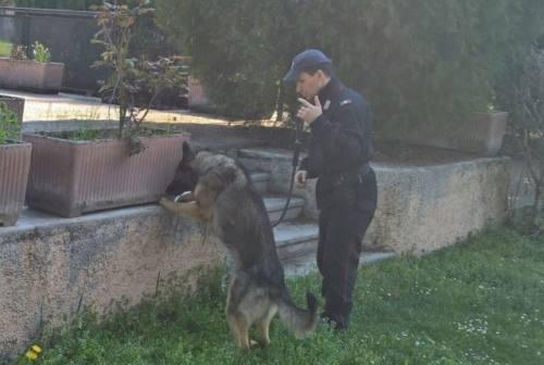 Pesaro, dopo il kit per l'eroina ancora droga tra i cespugli al parco Miralfiore