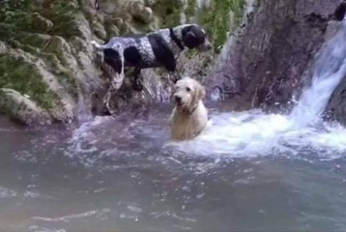 Ladri senza cuore a Sassoferrato: rubati due cani da tartufo