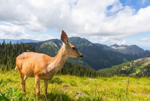 Animali e cambiamenti climatici: passeri, gazze e caprioli tra le specie a rischio