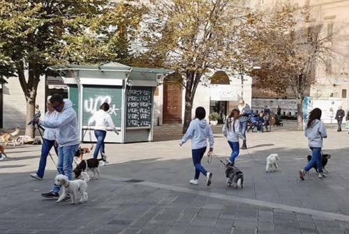 Ancona, il flashmob con i cani addestrati
