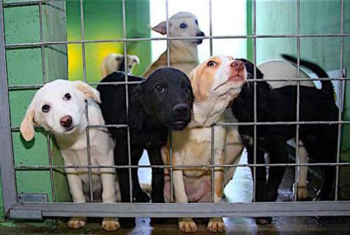 Guardie zoofile, l'appello per Natale: «Un animale è un impegno, ma chi è pronto scelga in canile o gattile»