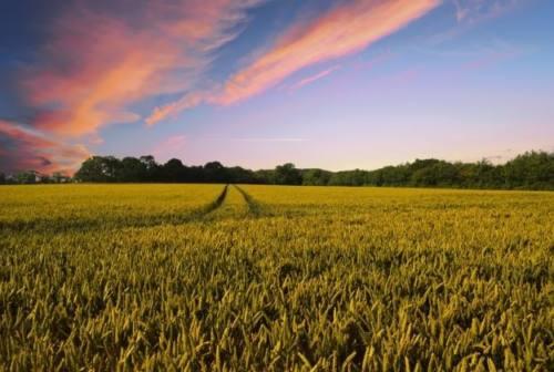 Marche, tre aziende agricole su dieci guidate da donne